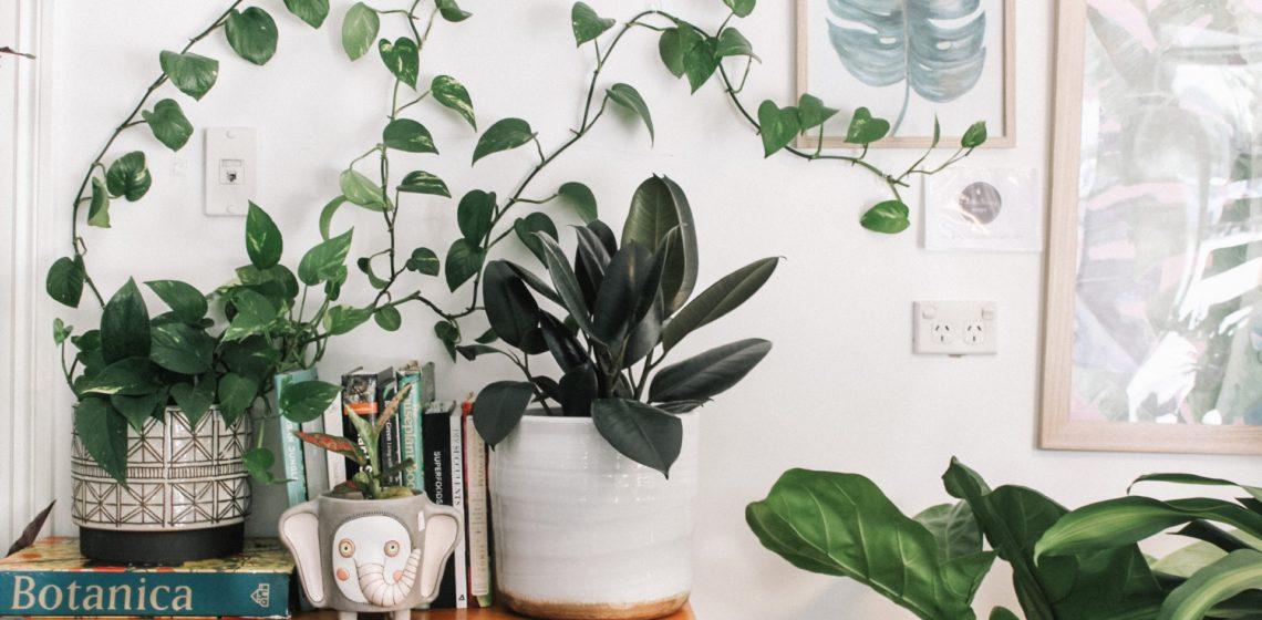 Nenarocne bytove rastliny, bytove kvety a starostlivost o ne
